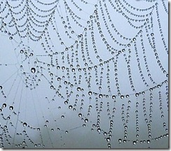 Spider web in rain
